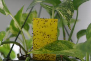 How To Get Rid Of Ants In House Plants